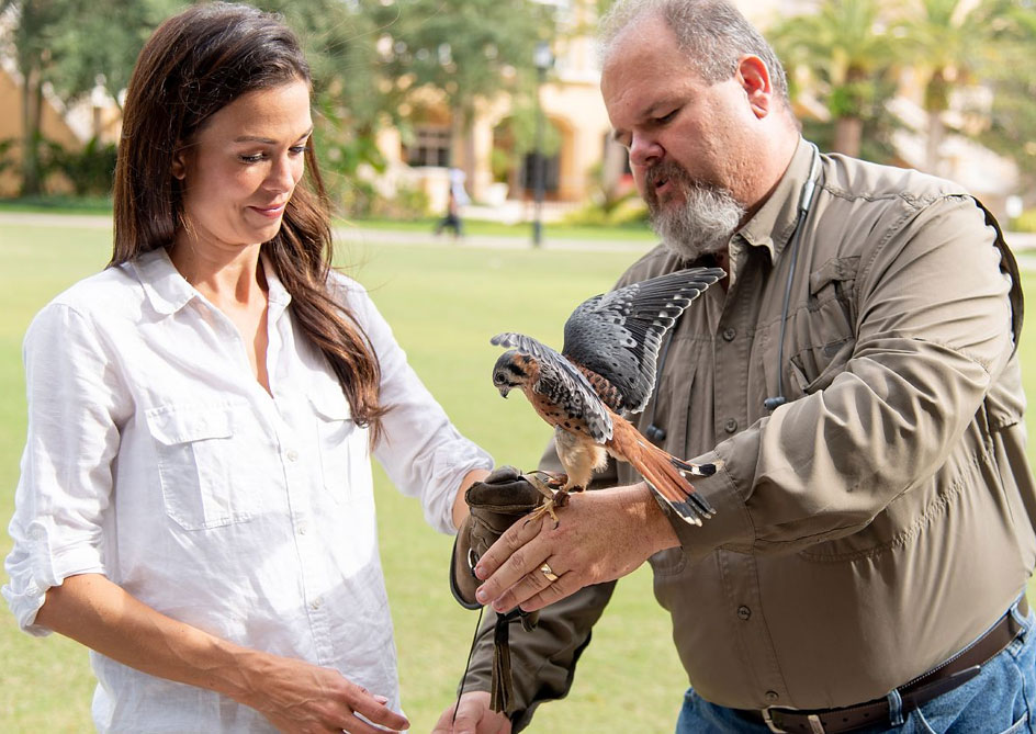 Falconry Experiences at Orlando, Florida
